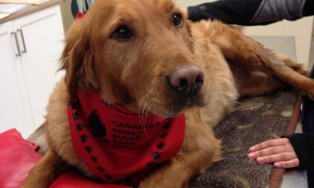 RRC Helps Pups in Need