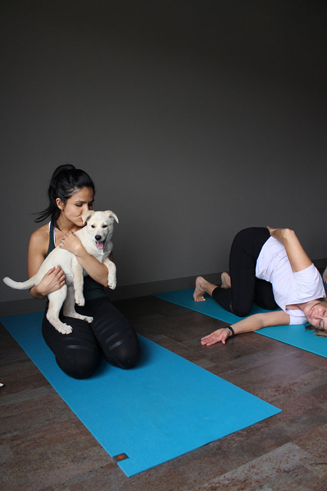 Rochelle Kives, teacher at The Yoga Barre, takes a break to cuddle with foster puppy Salmon, who she said was her favourite puppy at the Let's Get Downdog yoga class on Oct. 29, 2016. THE PROJECTOR/ Talia Smith
