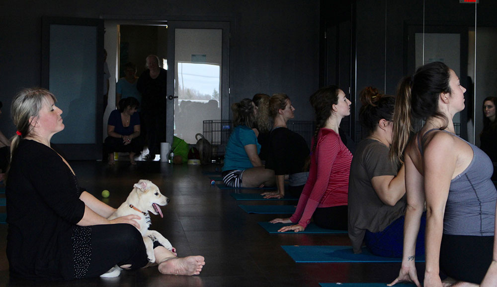 Foster puppy Salmon sits with The Yoga Barre owner, Heather Senderewich, for a couple deep breaths at the end of the Let's Get Downdog yoga class on Oct. 29, 2016. THE PROJECTOR/ Talia Smith