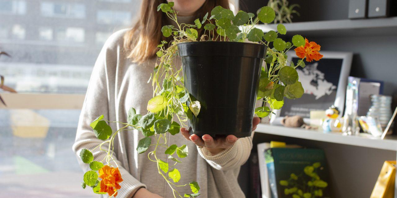 Plants on Campus