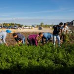The green roots of sustainability run deep at RRC